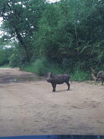 Zululand, Sydafrika: 20180224_100621_large.jpg