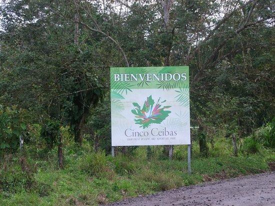 Sarapiqui, Costa Rica: cinco ceibas