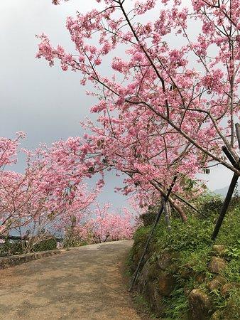 Taida Tea Garden