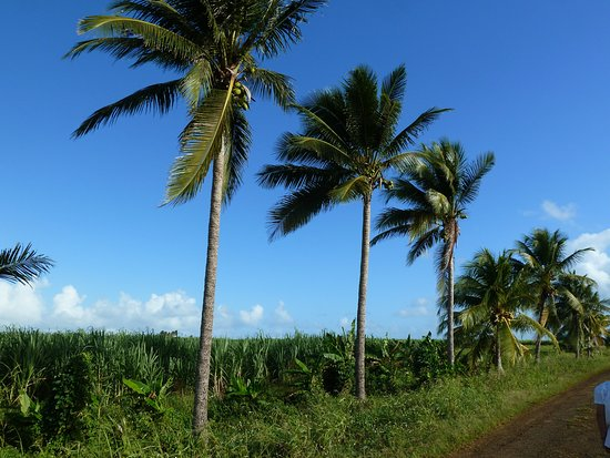 Deshaies, Guadalupe: Guadeloupe