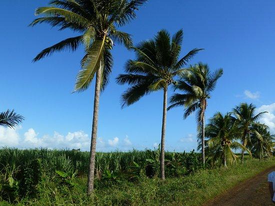 Deshaies, กวาเดอลูป: Guadeloupe