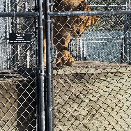 best zoo dating service spokane washington