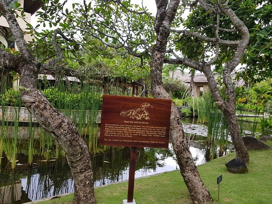 The Royal Beach Seminyak Bali - MGallery Collection: 20180303_145121_large.jpg