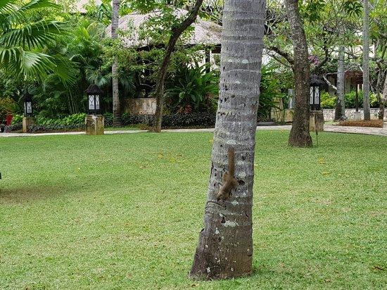 The Royal Beach Seminyak Bali - MGallery Collection: 20180303_152101_large.jpg