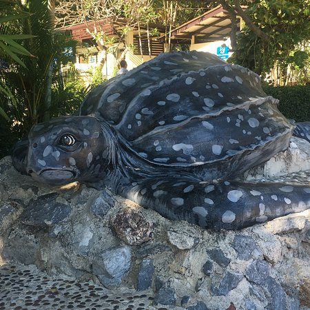 Sea Turtle Conservation Center, Sattahip: photo3.jpg
