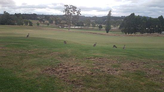 Chirnside Park, Australia: 20180225_200021_large.jpg