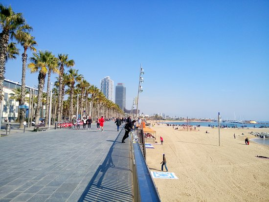 plage de barcelone photo de novotel barcelona city barcelone tripadvisor. Black Bedroom Furniture Sets. Home Design Ideas