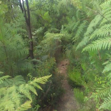 Riva Trigoso, Italie : Vegetazione nella salita a Punta Baffe