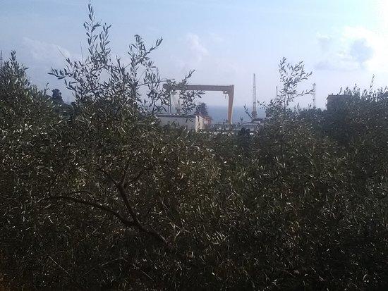 Riva Trigoso, Italie : Uliveti sul mare - Visti da P Baffe