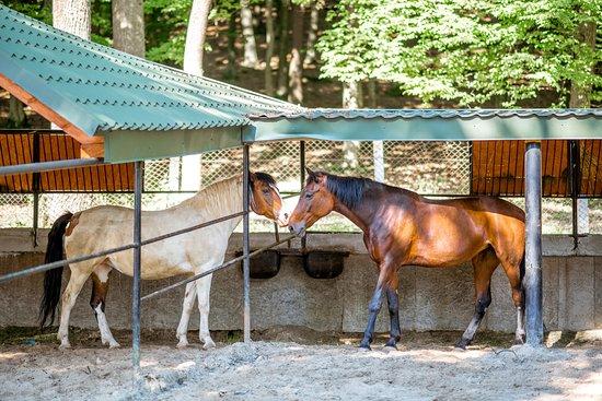 Horse Riding Club Buhta Vikingiv