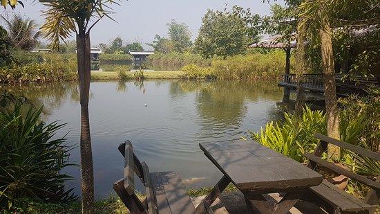 Bueng Pai Farm: IMG-20180302-WA0015_large.jpg