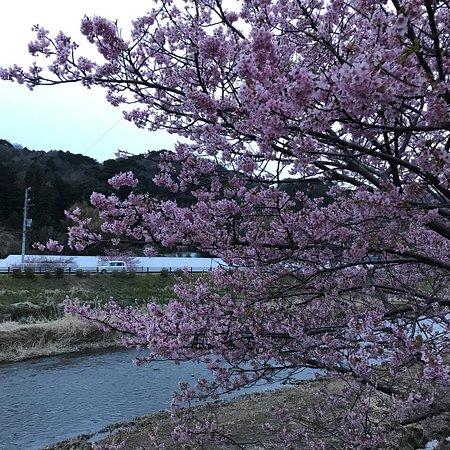 今年最初の桜