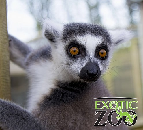 Telford, UK: Exotic Zoo