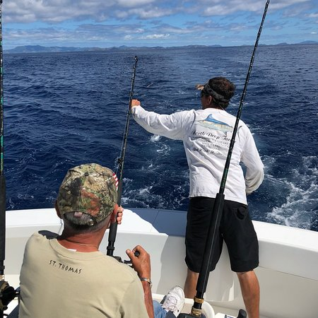 Mixed bag sportfishing offshore adventures st thomas for Deep sea fishing st thomas