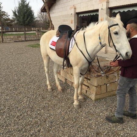 Akhal-Teke Horse Riding Center: photo1.jpg
