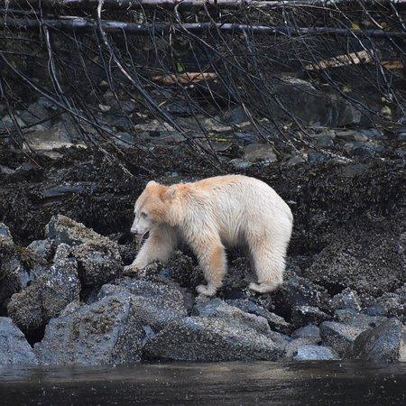 Klemtu, Canada: photo3.jpg