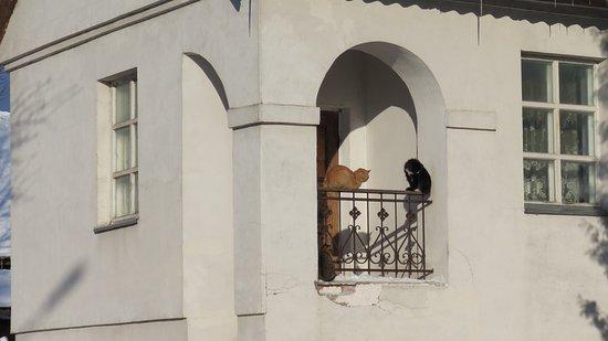 Sebezh, Rosja: Себеж любит кошек