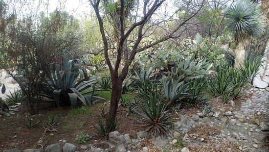 Parque Ecologico El Chapulin