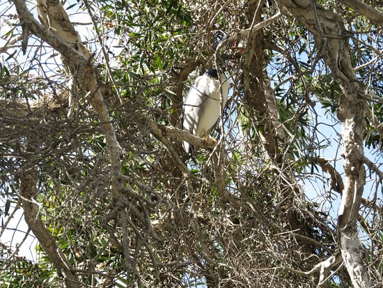 Dana Point, Kalifornien: Heron in the Tree