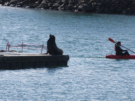 Dana Point, CA: Sea Lion posing for me