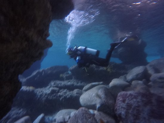 Trident Diver - NAUI Certification, Guided Dives, La Jolla Caves ...