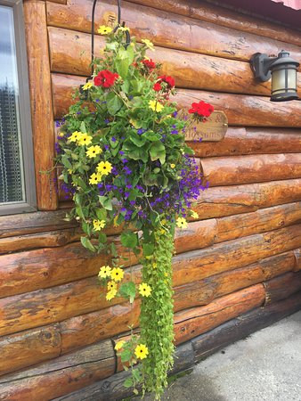 Glacier View, AK: Alaska's cool temps and daylight allow for gorgeous flowers