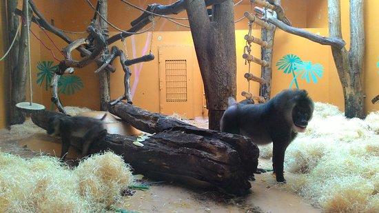 Tierpark Hellabrunn: P_20180304_153608_large.jpg