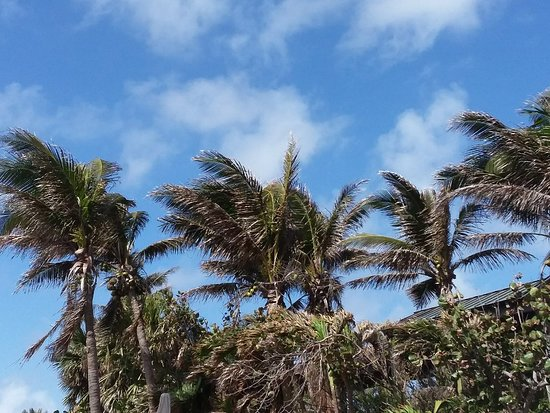 Jensen Beach, FL: 20180222_120030_large.jpg