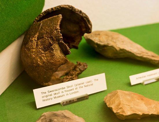 Dartford Borough Museum: Swanscombe Skull replica