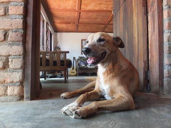 Kande Horse: The gentle, old dog at the retreat (im not a dog person but he was so lovely)