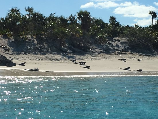 Robert's Island Adventures: Iguana Island a sight to see