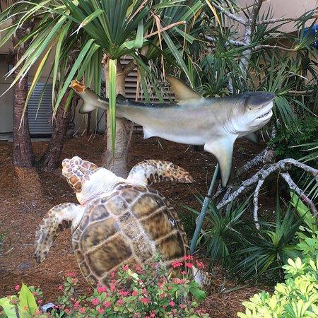 The Ritz-Carlton Golf Resort, Naples: photo3.jpg