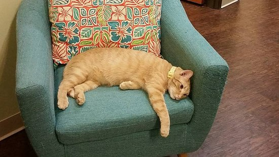 Exceptionnel The Charming Cat Cafe: Chilling In A Chair