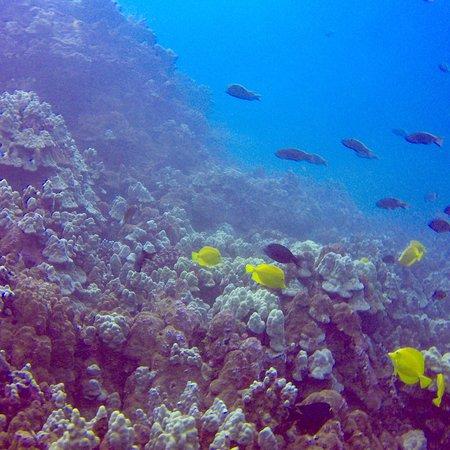 Best Dive Shops Big Island
