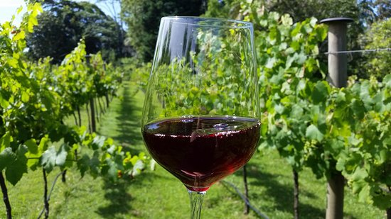 Tamborine Mountain, Australia: Enjoying a Glass in our vineyard