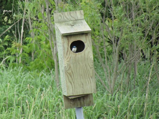 Marquette, Айова: The bird inside the bird house