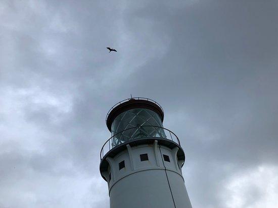 Kilauea, HI: Birds, birds, birds, lighthouse