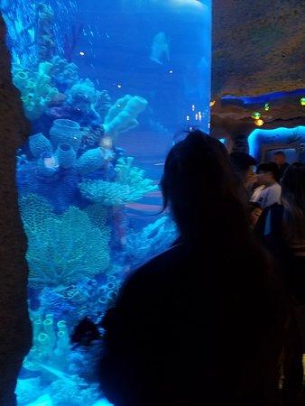 Aquarium Restaurant: 20180303_181324_large.jpg