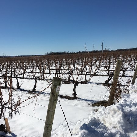 Reif Estate Winery: photo3.jpg