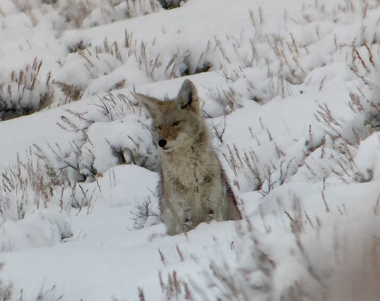 Wildlife Expeditions of Teton Science Schools Photo