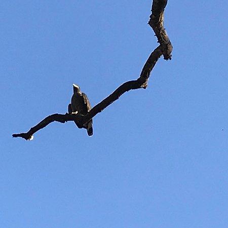 Mahua Kothi: photo7.jpg