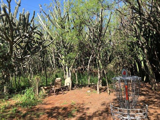 Weliweli Disc Golf Course