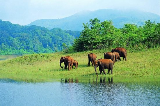 Kerala Hills, Backwaters & Wildlife 5...