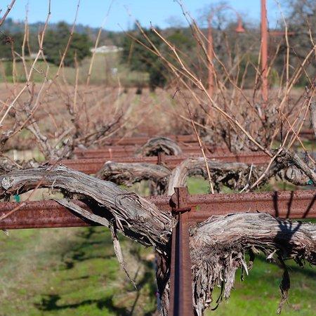 Ironstone Vineyards: photo8.jpg