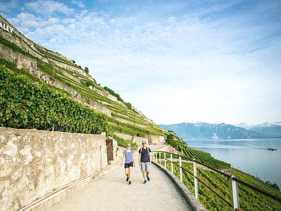 Βοντ, Ελβετία: Une promenade en Lavaux, vignobles en terrasses, inscrit au patrimoine mondial de l'UNESCO
