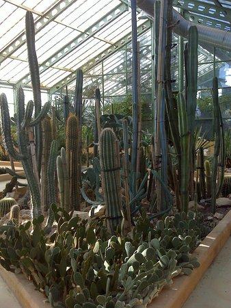 Jardin botanico de castilla la mancha albacete for Jardin botanico castilla la mancha