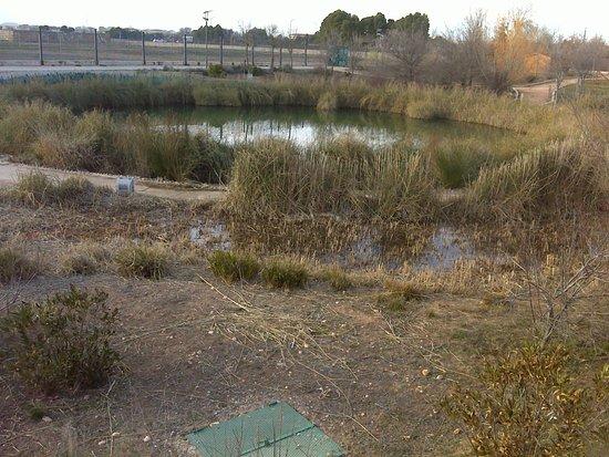 Laguna 2 jardin botanico de castilla la mancha for Jardin botanico castilla la mancha