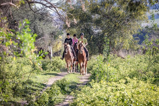 Riding Academy of Crete - Ippikos Riding Club: Cretan mountain Rides