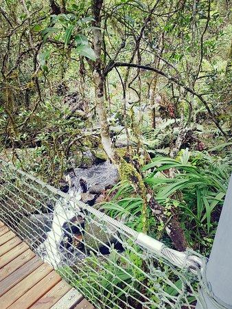 Graskop, South Africa: Little stream