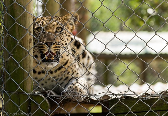 Seaview Lion Park : Caged Cheetah, wishing he wasnt there
